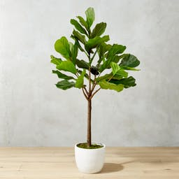 Potted Faux Fiddle Leaf Fig 5'