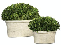 Oval Domes Preserved Boxwood Set/2 Green