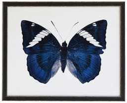 Midnight Blue butterfly in black and silver moudling Blue Kids' Wall Art, 18x16