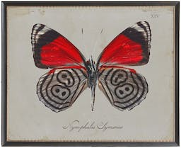 Red and black butterfly Plate XIV on grey background in black beaded frame Red Kids' Wall Art, 26x20