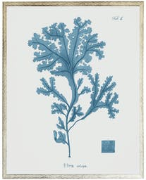 Blue Coral in Distressed White Shadowbox Blue Wall Art