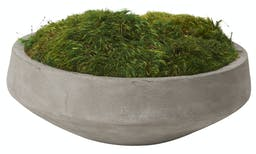 Preserved Mood Moss In Round Cement Bowl