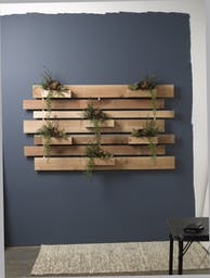 RED/GREEN ECHEVERIA, PITTOSPORUM AND BURRO TAIL ON EXTRA LARGE WOODEN SLATE WALL