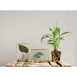 Cristan Photo Frames with Stands (Set of 2 Styles) Gold