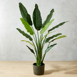 Potted Faux Bird of Paradise 6'