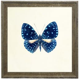 Bright Blue Butterfly with Light Blue Spots in Vintage Cream and Gold Moulding - Small Blue Kids' Wall Art