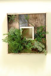 SQUARE WOODEN SHADOW BOX WITH MIXED FERN AND SUCCULENTS
