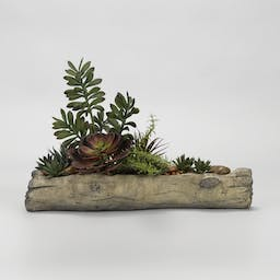 ASSORTED SUCCULENTS ON CEMENT LOG