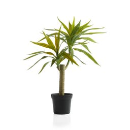 Faux Potted Yucca