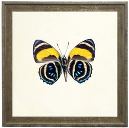 Bright Yellow Striped Butterfly in Vintage Cream and Gold Moulding - Small Yellow Kids' Wall Art