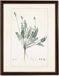 Astragalus in Brown moulding with Gold bead Grey Wall Art