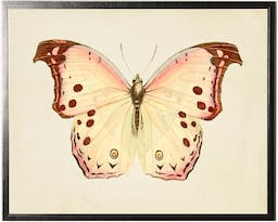 Horizontal Cream Butterfly with Pink Edges in Pewter Shadowbox Cream Kids' Wall Art