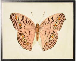 Horizontal Pink Butterfly in Pewter Shadowbox Pink Kids' Wall Art