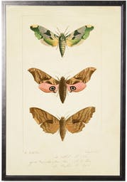 Colorful Moth Trio in Pewter Shadowbox Brown Kids' Wall Art