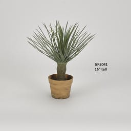 """15"""" Potted Whipple Yucca Plant"""