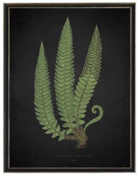Fern C on aged black background in black and silver shadowbox Green Wall Art, 19x25