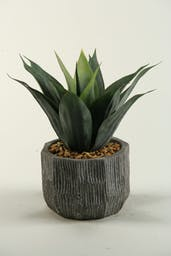 Agave Plant In Ceramic Planter Red/Green
