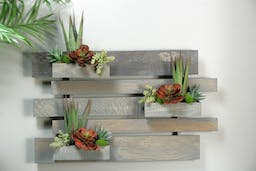 Agave Plants And Echeveria In Wooden Wall Brown/Green