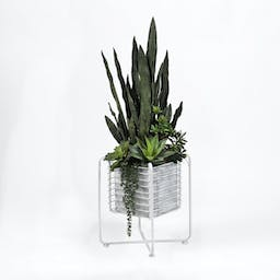 Sensevaria Plant with Mixed Grennery and Succulents in Cage Stand White