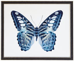 Blue Spotted butterfly in black and silver moulding Blue Kids' Wall Art, 32x26