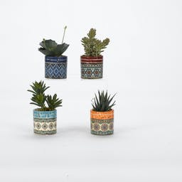 Assorted Succulents in Colorful Ceramic Cups- Set of 4 Multi