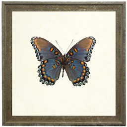 Bright Blue Butterfly with Orange Spots in Vintage Cream and Gold Moulding-- Small Blue Kids' Wall Art