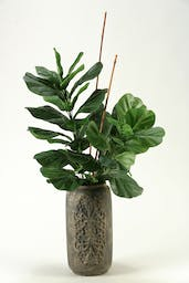 Fiddle Leaf Fig Branches In Tall Concrete Vase