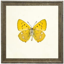 Bright Yellow Butterfly with Small Black and White Spots in Vintage Cream and Gold Moulding Yellow Kids' Wall Art