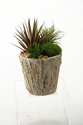 ASSORTED SUCCULANTES IN WEATHERED OAK PLANTER