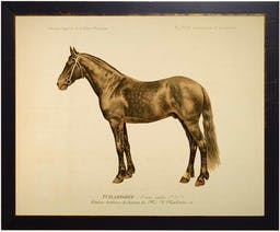 Horse Bookplate in black and copper frame Brown Kids' Wall Art